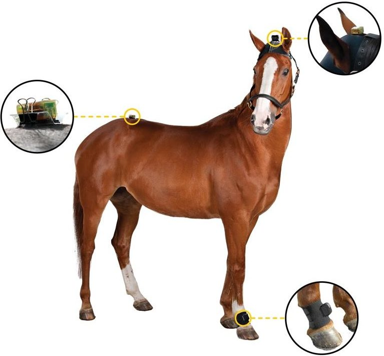 Objective Lameness Evaluation with Equinosis Q Sensors