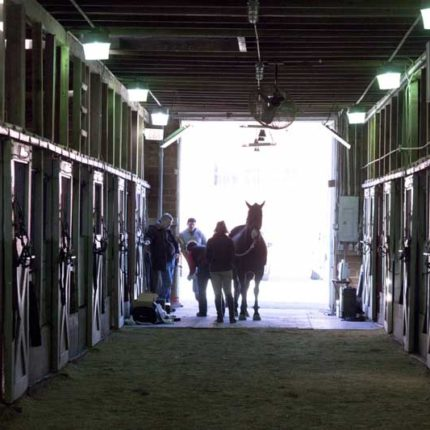 Horse Wearing and Equinosis Q Inside of Barn at Equinosis Objective Lameness Academy