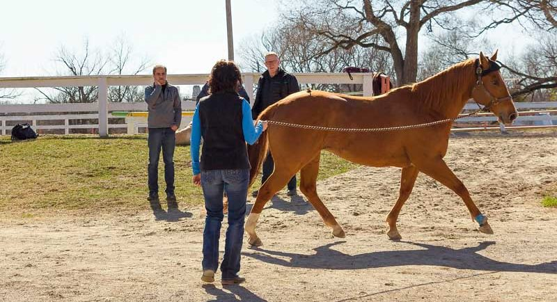 Equinosis Objective Lameness Academy Lunging Demonstration