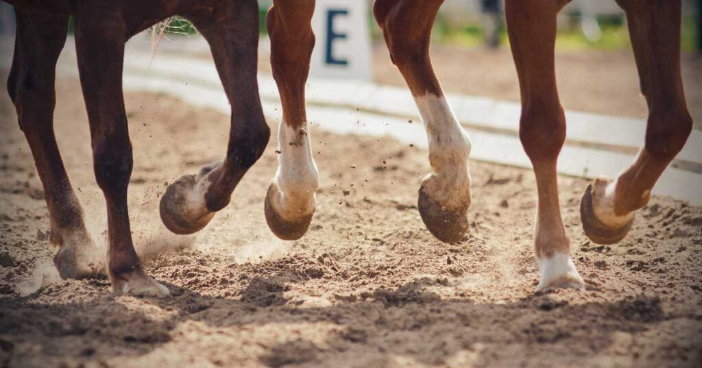 Equine Lameness and Poor Performance-Problems Of The Forelimb And Neck